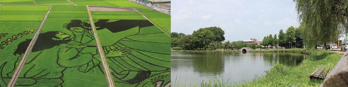 田んぼアートと水城公園